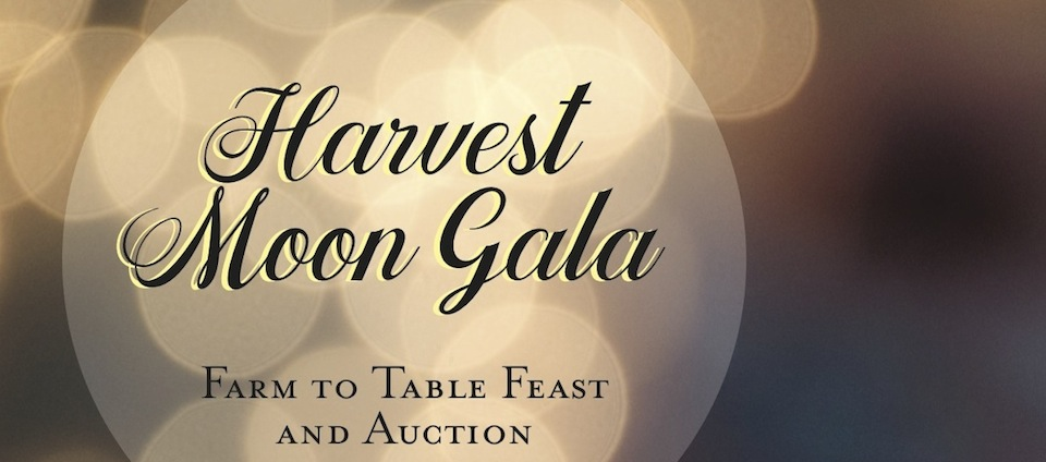 cover-photo-for-gala